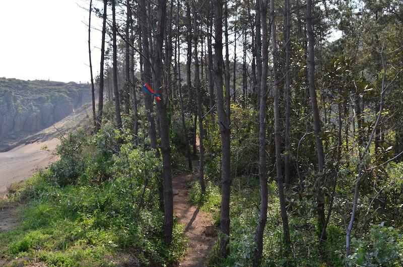 A treeful ending to a 7k hike