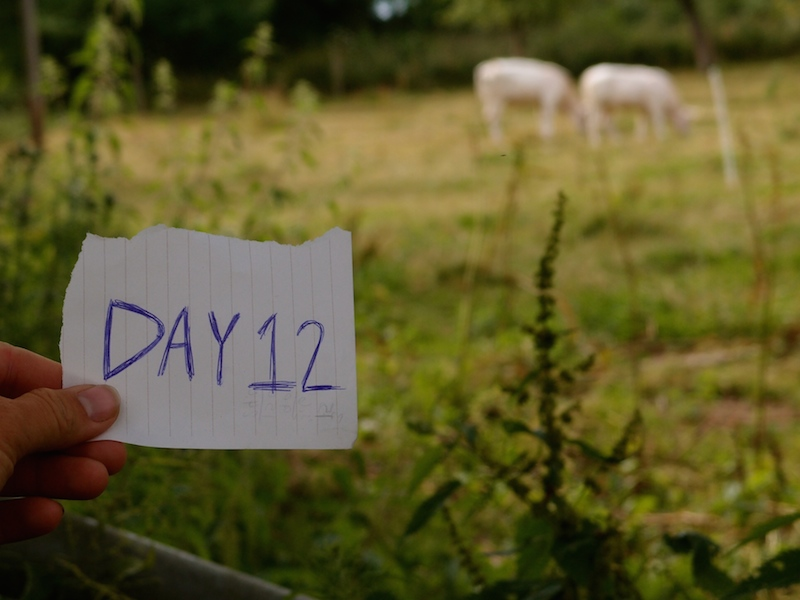 Day 12: Sleeping in a stranger's garden in Germany...while chllin' with their cows
