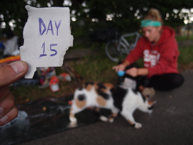 Day 15: Taking shelter from the rain...with stray cats stealing our dinner